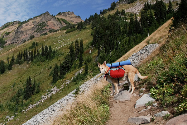 UL Solo Tent for me and my dog? - Backpacking Light
